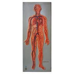 Rare Anatomical Sculpture Model