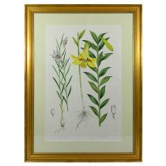 Set of Three Framed Botanicals Depicting Lilies