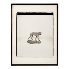 """Close Shadow"" Polaroid Photograph by William Wegman, circa 1995, USA"