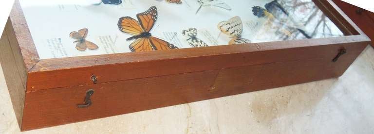 Mid-20th Century Butterfly Specimen Box For Sale
