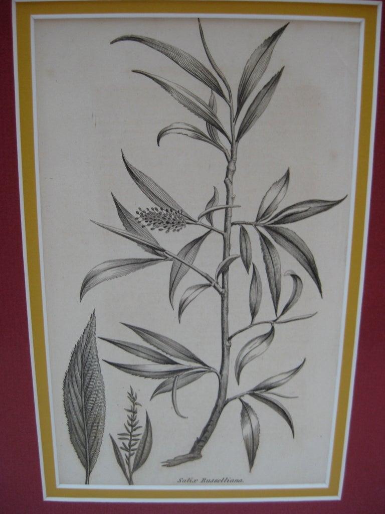 Black And White Framed Floral Prints