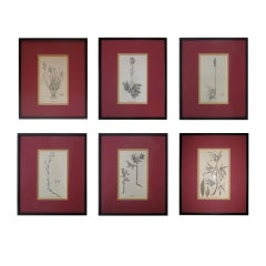 18th Century Black and White Floral Prints, Set of Six