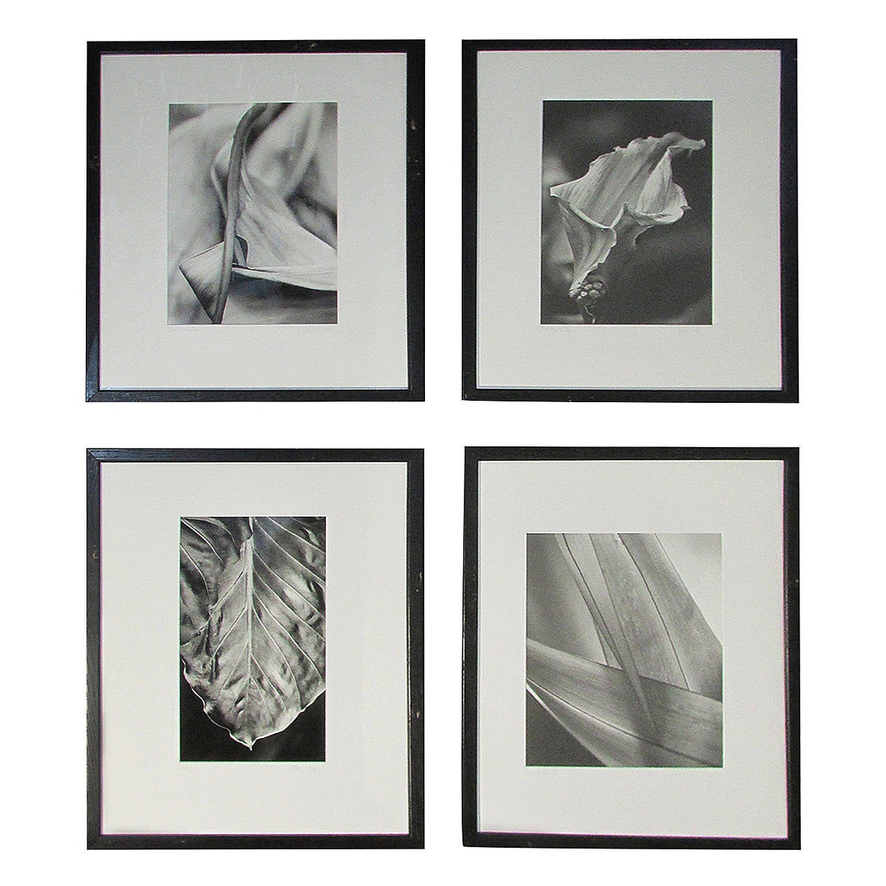 Erotic Flora & Fauna Photographs in the Style of Robert Mapplethorpe