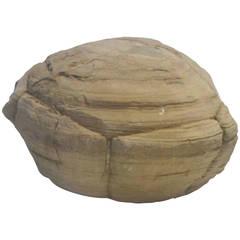 Prehistoric Turtle Stone Concretion Fossil