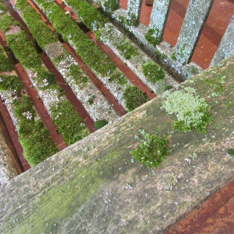 Teak Garden Bench With Moss & Lichen For Sale 4