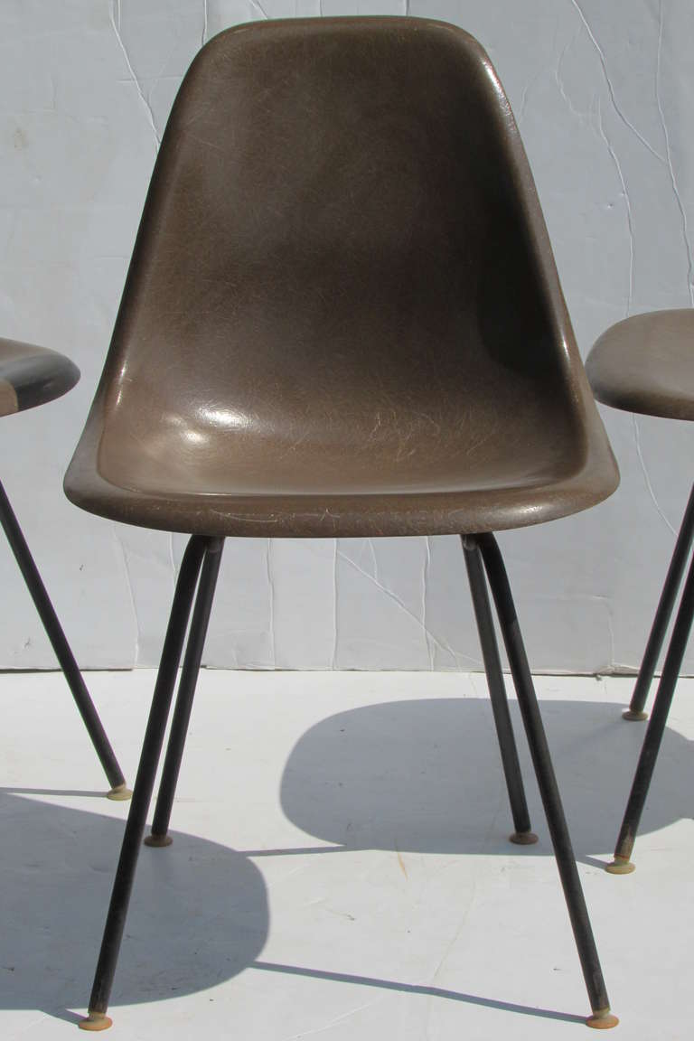 Early Eames Seal Brown Fiberglass Chairs at 1stdibs