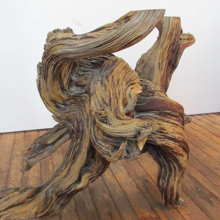 Driftwood Redwood Burl Root Sculpture / Table Base 5
