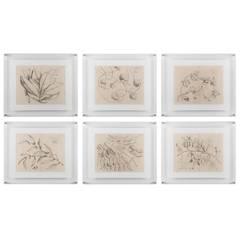Six Antique Prints of Asian Flora