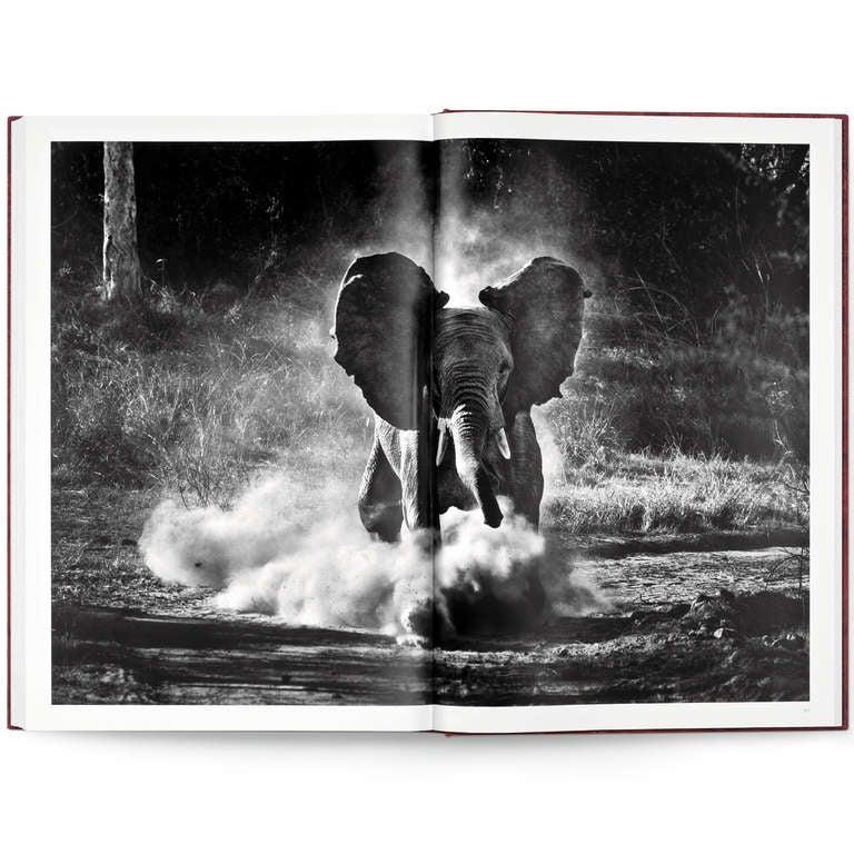 Sebastião Salgado: Genesis, Art Edition C For Sale 3