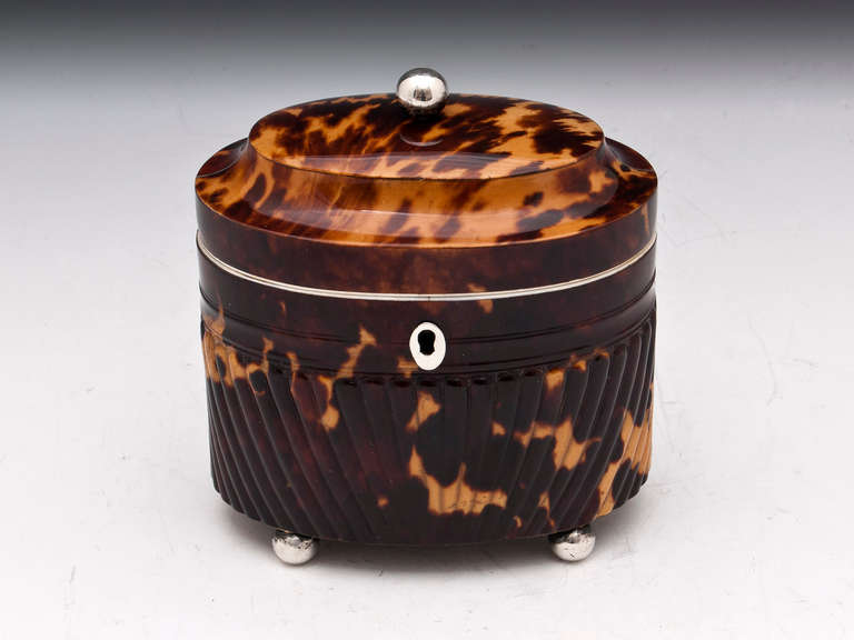 Regency Antique Pressed Tortoiseshell Oval Tea Caddy For Sale