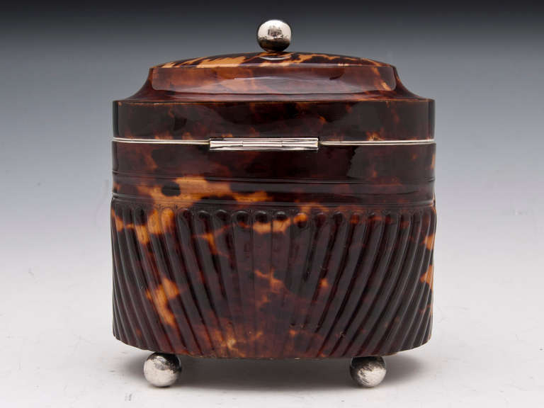 19th Century Antique Pressed Tortoiseshell Oval Tea Caddy For Sale