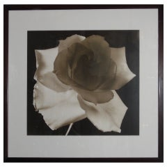 Large 20th c. Floral Photographic Print by Frederic Ohringer