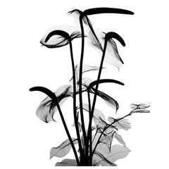 """Flower X-Ray (Lilly)"" by Dr. Mehemed Fehmy Agha"