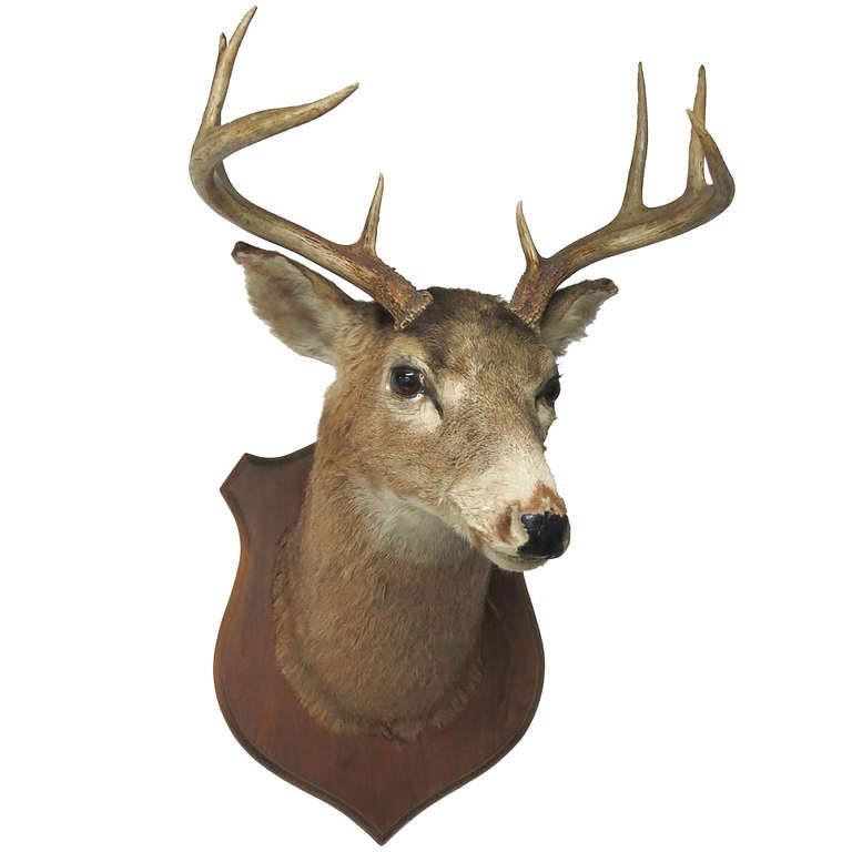 Eight Point Mounted Buck Taxidermy