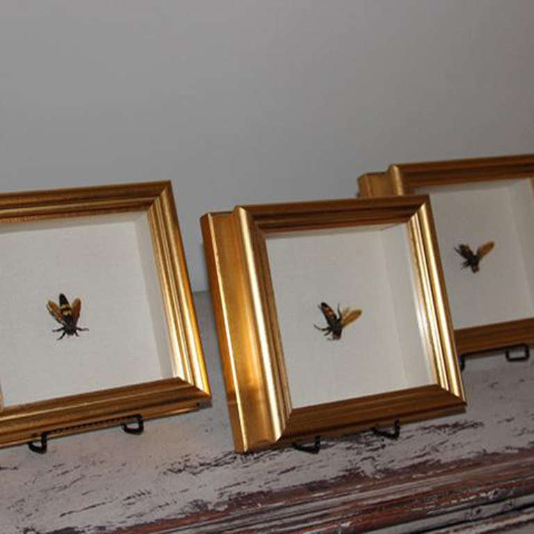 French Killer Bee Shadow Box At 1stdibs