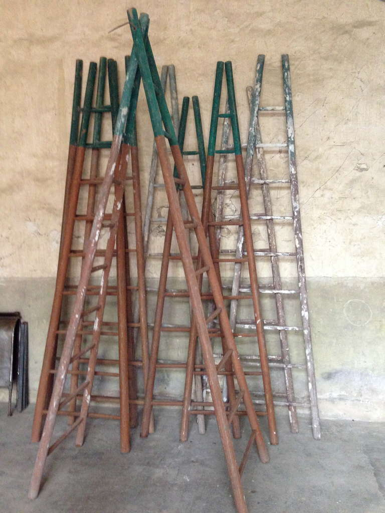 French Set of Ten 19th Century Ladders