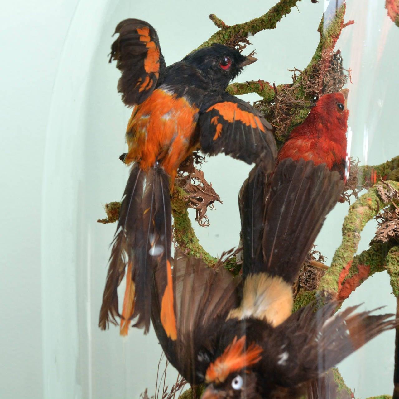 Cased Exotic Birds 7