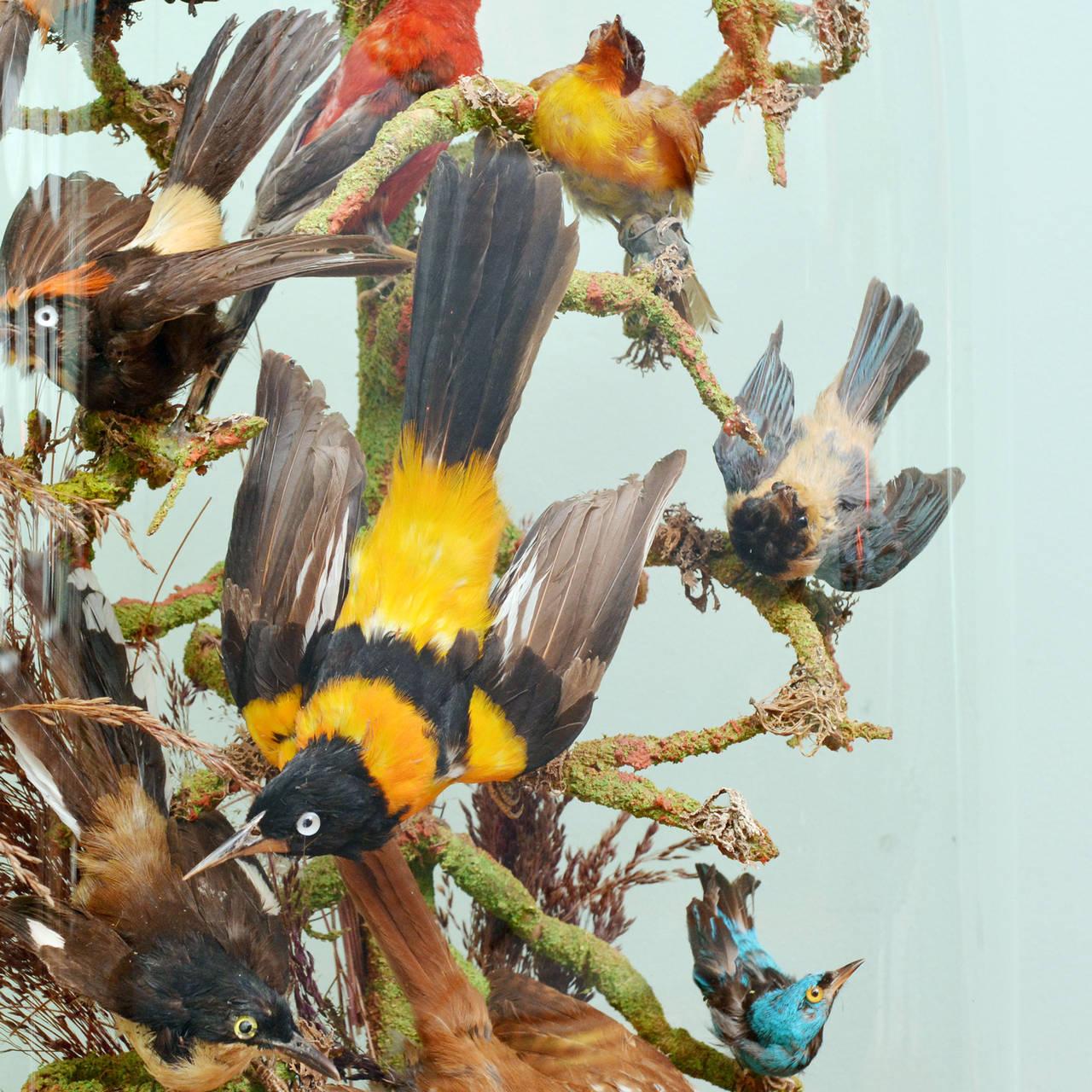 Cased Exotic Birds 9