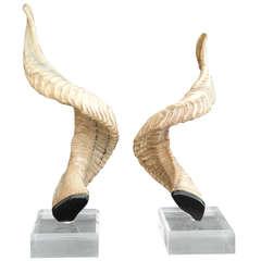 Decorative Ram Horns on Lucite