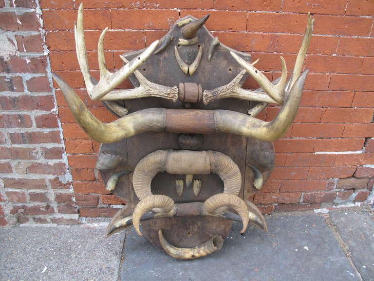 Antique Horn And Antler Trophy Mount At 1stdibs