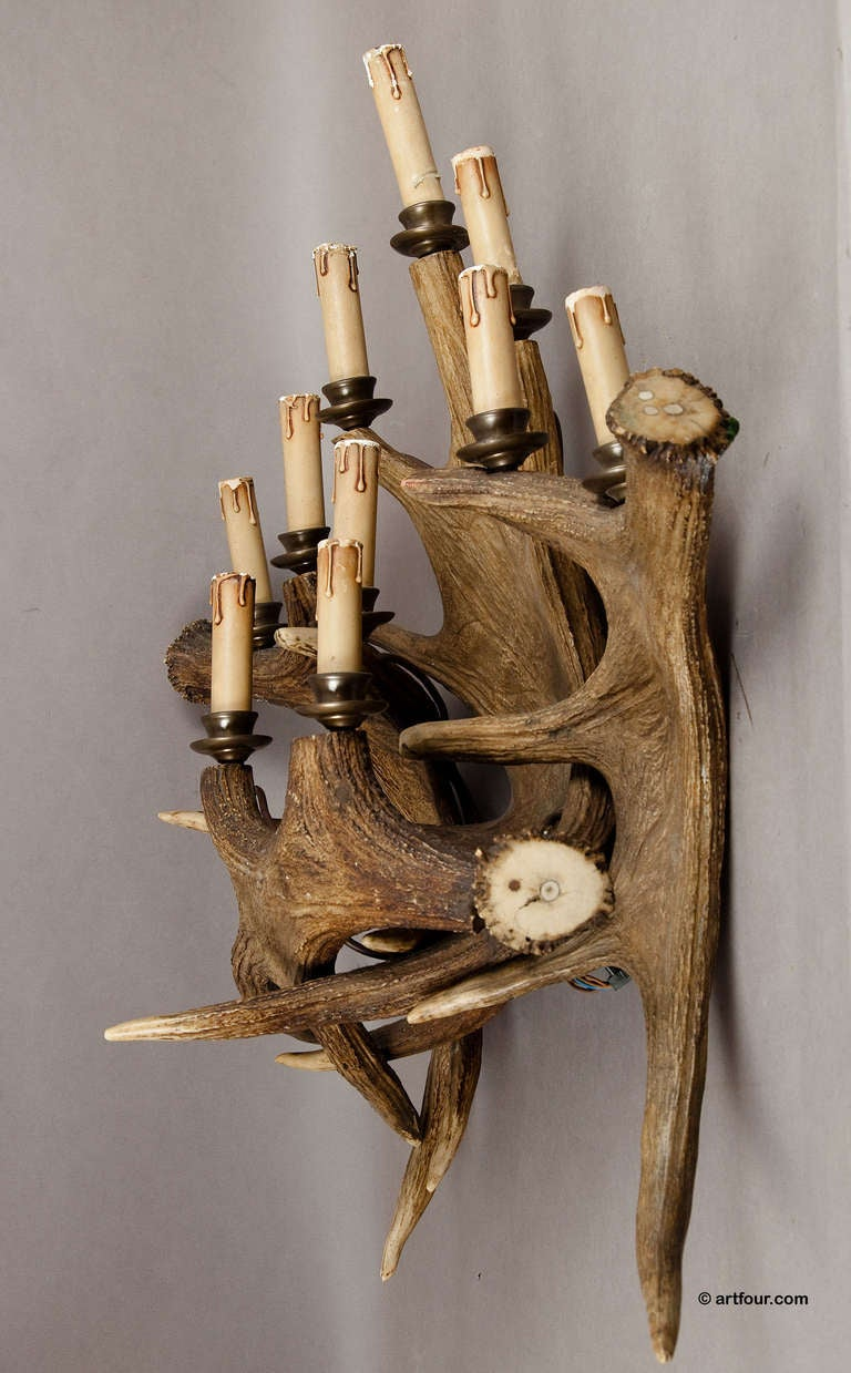 Large Antique Black Forest Elk Horn Sconce Circa 1900 at 1stdibs