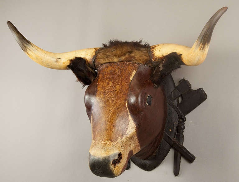 Wooden Carved Bull Head From A Butchery Ca 1880 For Sale