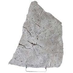 Seymchan Meteorite Slice