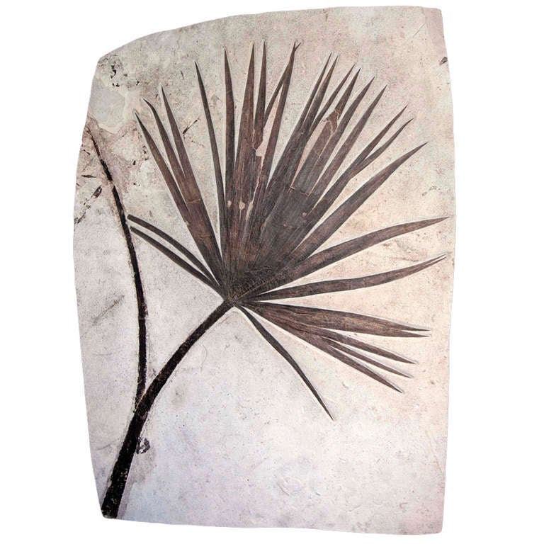 Fossilised Palm wall plate