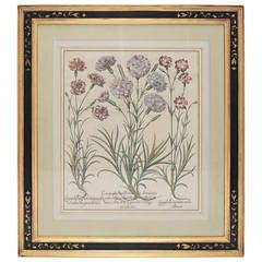 Basil Besler, Caryophyllus Flore