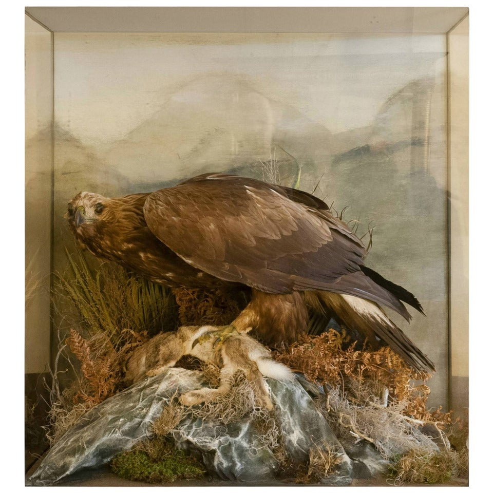 very large taxidermy golden eagle for sale at 1stdibs
