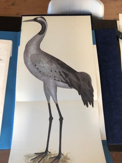 Rudbeck CRANE - Limited First Edition Portfolio - #482 of 1499 portfolios
