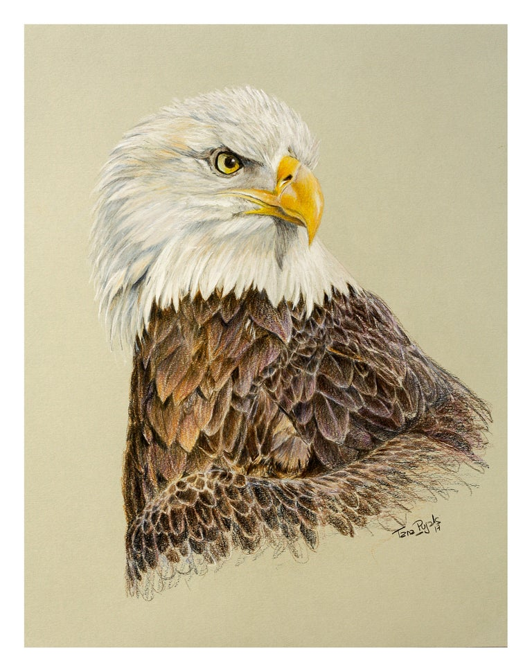 Eagle by Tana Pujals Original Pencil Drawing