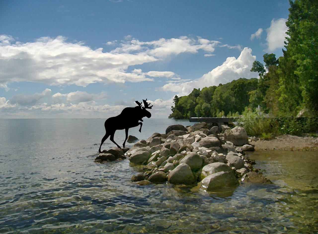 Moose Landing 1/10