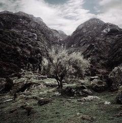 Milford Pass Tree I, New Zealand
