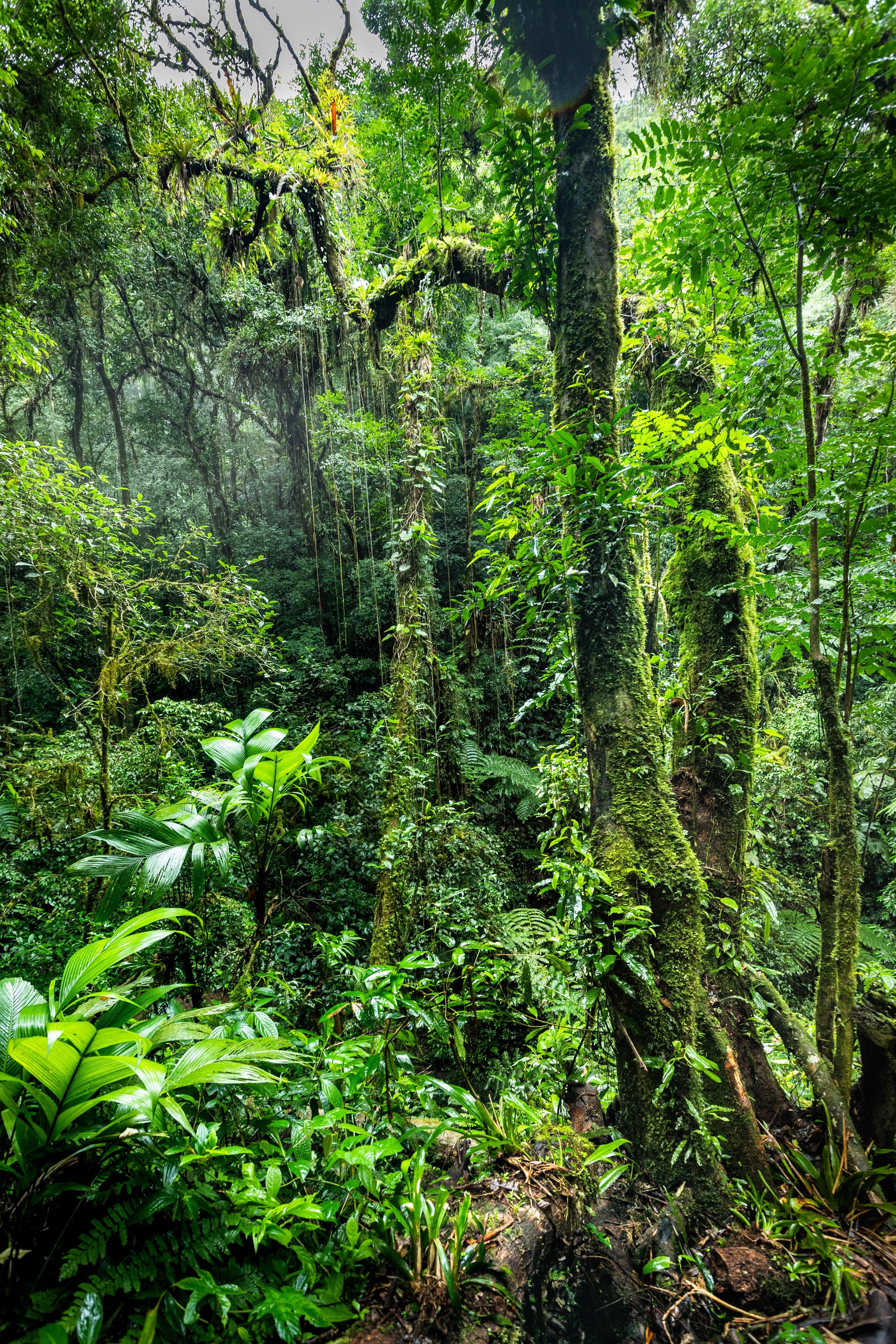 Rainforest, Brazil