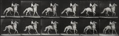 Eadweard Muybridge, Animal Locomotion (Plate 589), 1887, Collotype