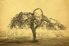 Joyce Tenneson, Apple Tree, 2016, archival pigment ink print mounted to aluminum