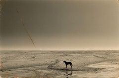 Yamamoto Masao, #4, 1993, gelatin silver print (dog on river)