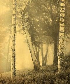 Joyce Tenneson, Birches, 2016 (trees)