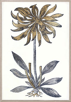 Historical Botanical 3, Gold Leaf, Framed