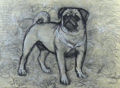 Bertie the Pug, 20th Century British chalk drawing