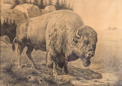 Bison in a landscape - 20th century pencil drawing by Oscar Schafft