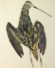 Vintage French Gouache - Bird Specimen
