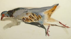 Vintage French Gouache - Game Bird Specimen