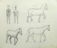 Pencil Sketch - Horse Study