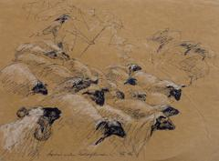Pen & Ink Drawing - Flock of Sheep