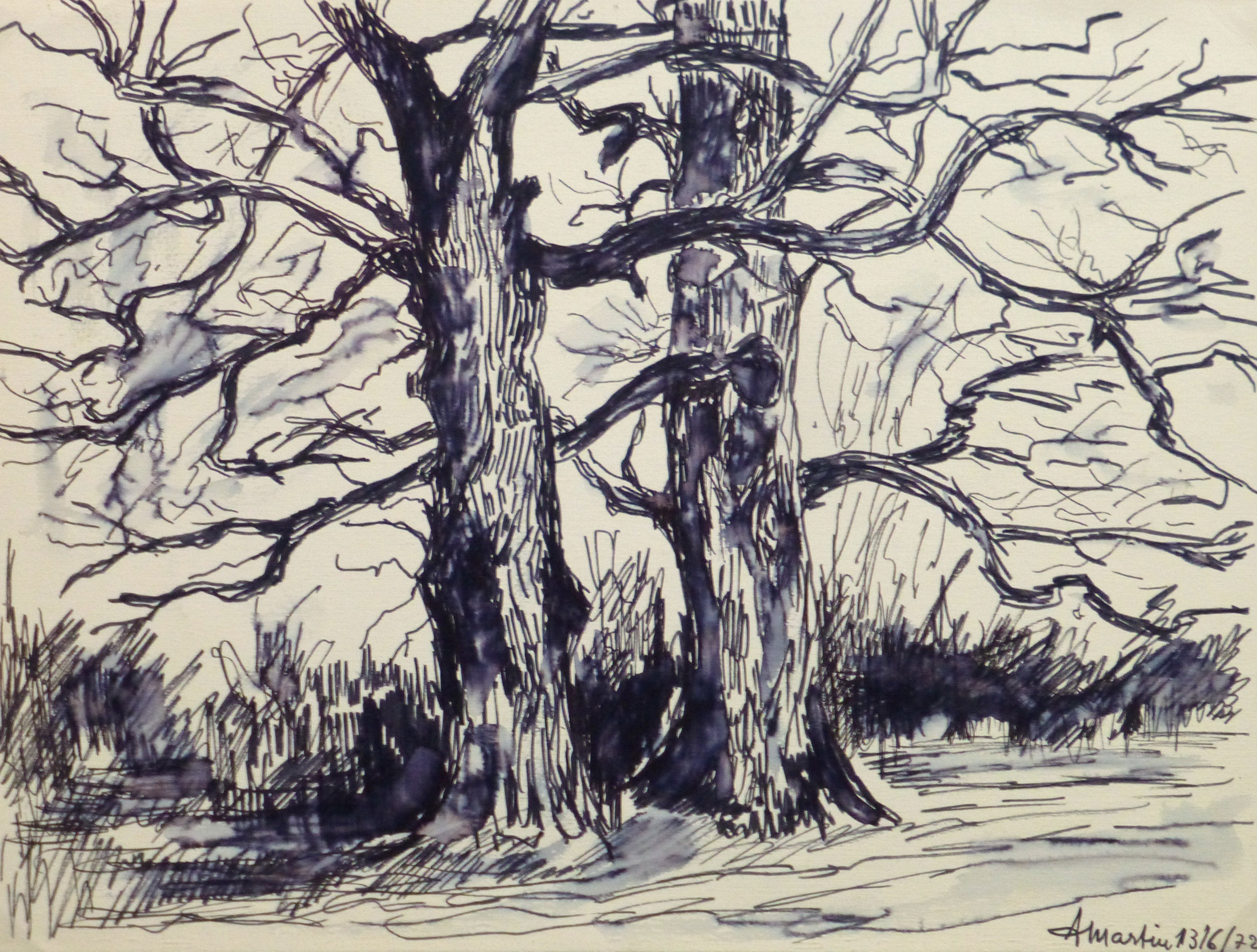 French Pen & Ink - Two Trees