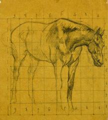 Study of Horse