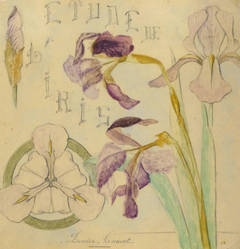 Antique French Pencil & Watercolor - Study of Irises