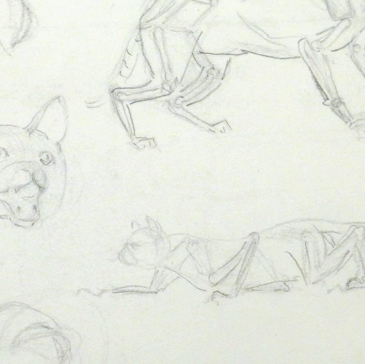 Vintage pencil drawing cat portraits